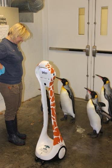 Students see penguins up close via VGo
